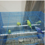 i-want-to-sell-my-birds-along-with-cages-small-4