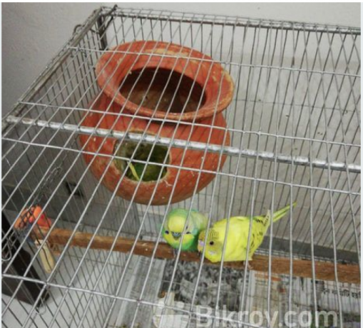 i-want-to-sell-my-birds-along-with-cages-big-1