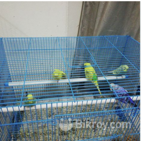 i-want-to-sell-my-birds-along-with-cages-big-4
