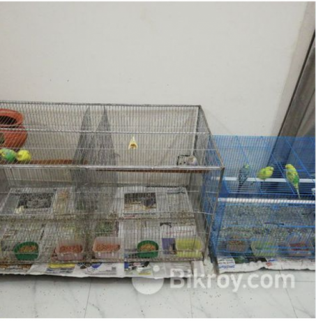 i-want-to-sell-my-birds-along-with-cages-big-0